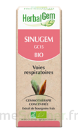 Herbalgem Sinugem Solution Buvable Bio Fl Cpte-gttes/30ml à UGINE